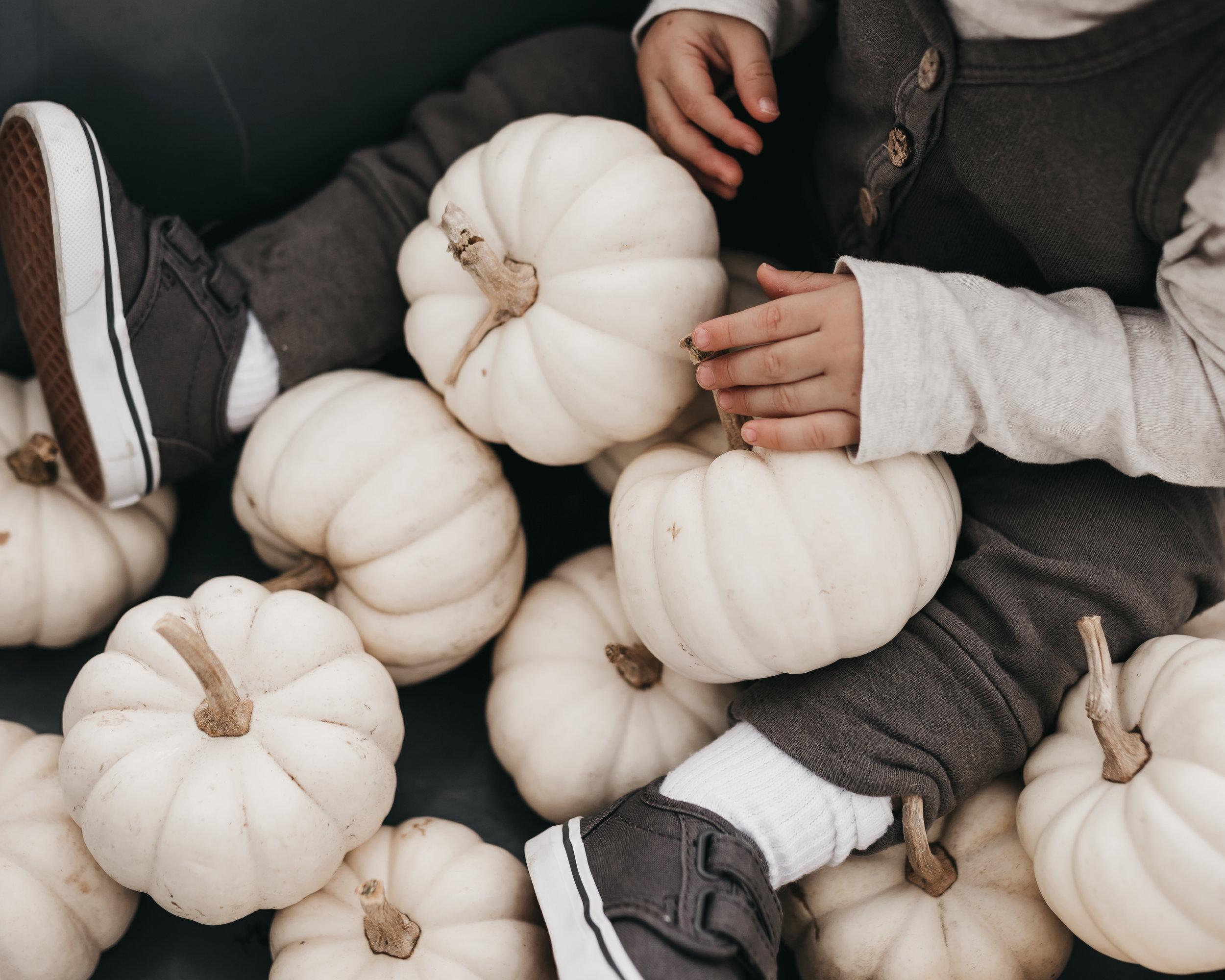 Lisa Dietrich Media Pumpkin Patch