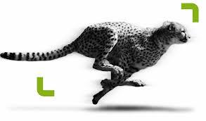 running cat.jpg