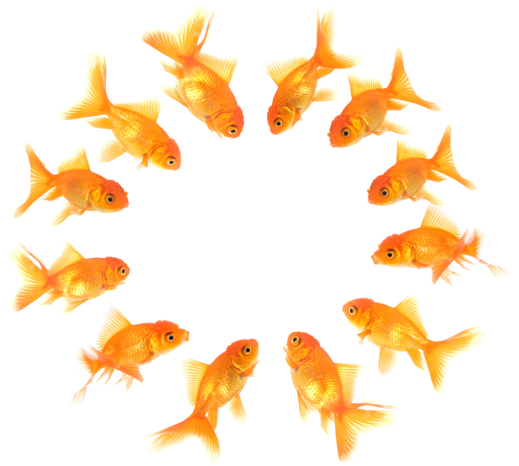 stock-photo-6493356-xxl-curious-fishes.jpg