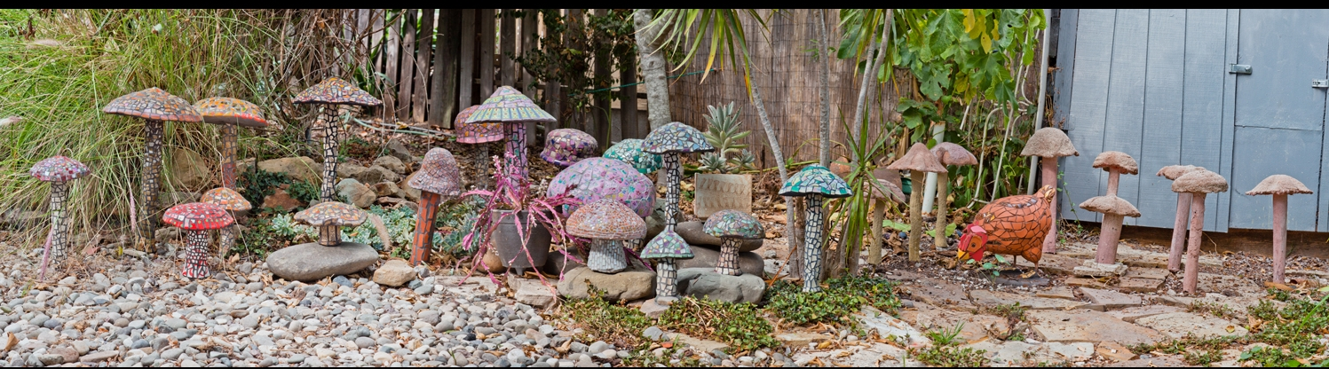 Mushrooms. Sizes vary.