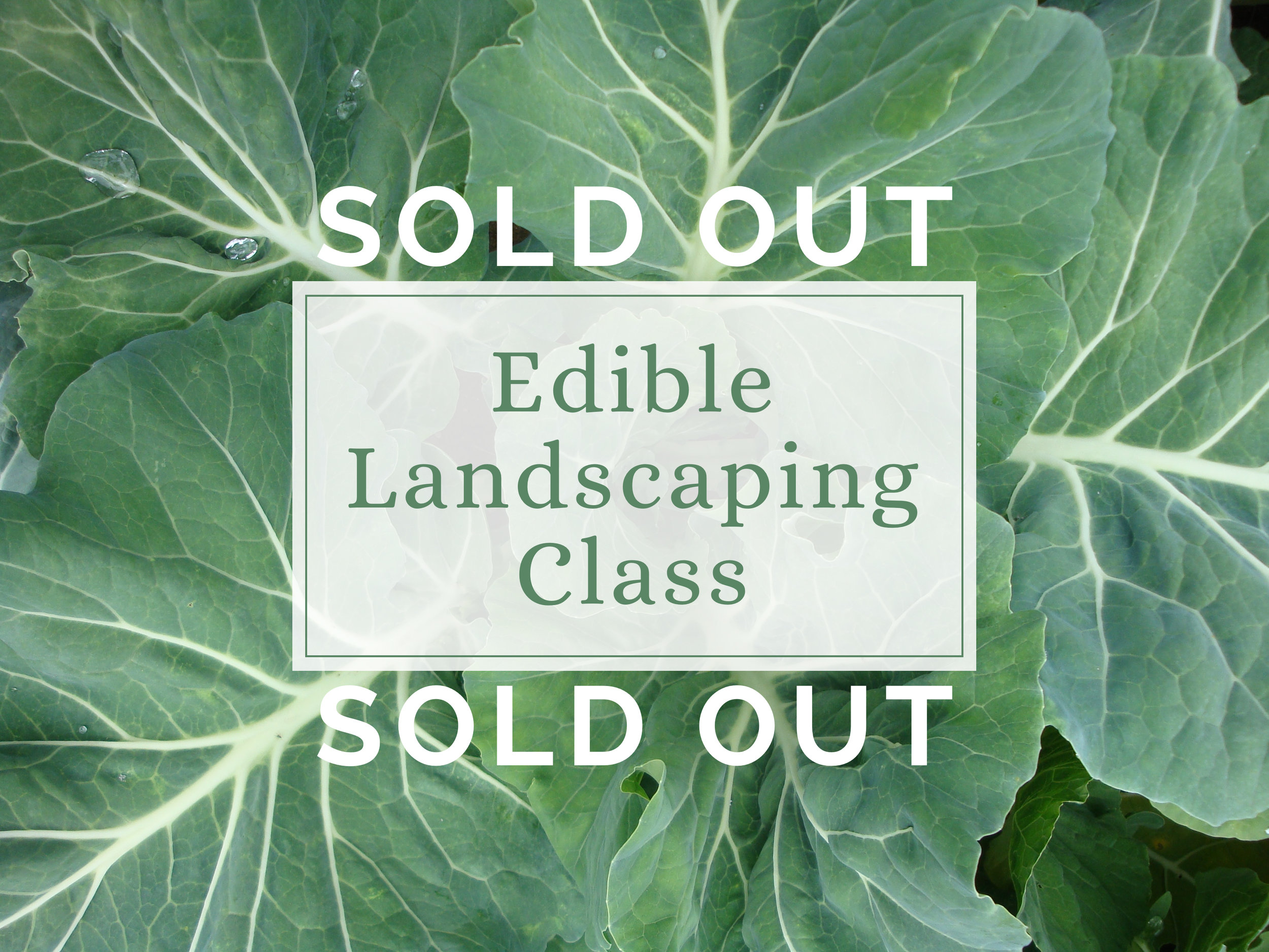 edible landscaping class sold out.jpg