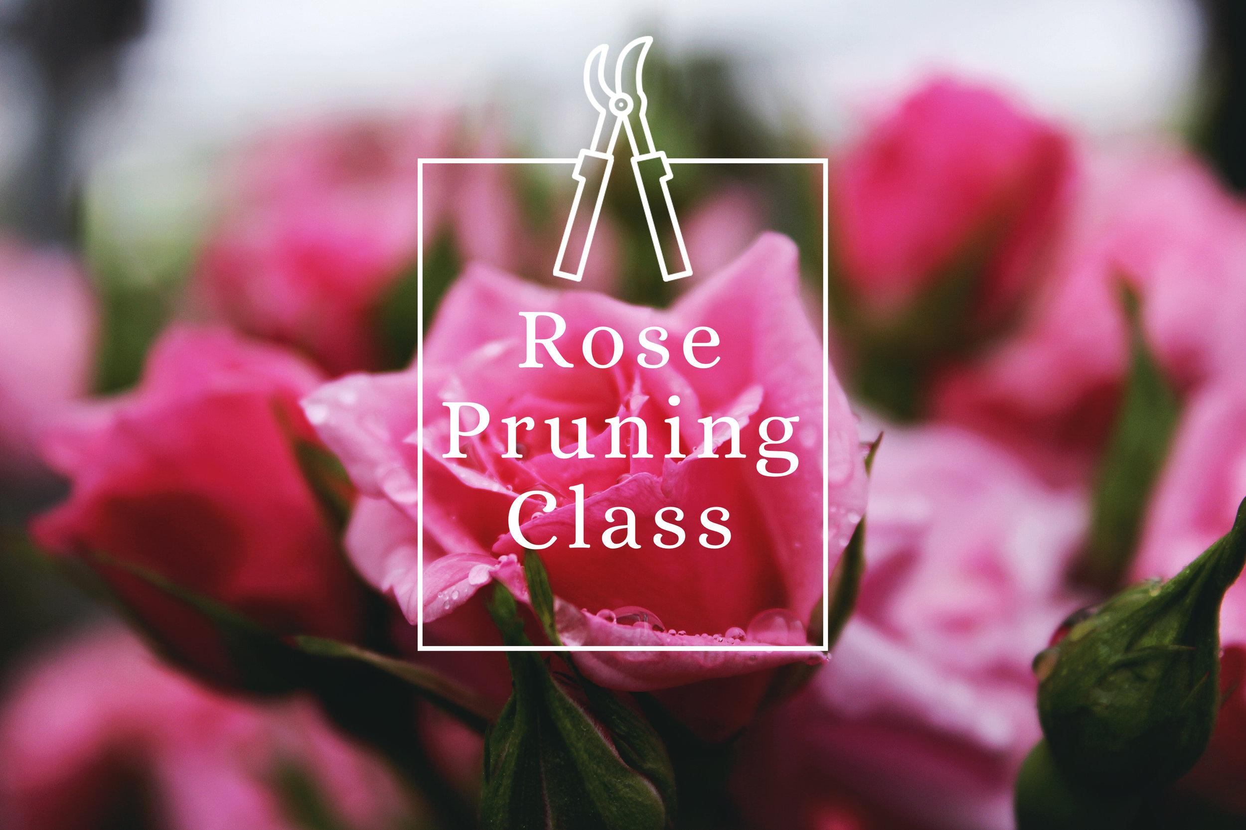 rose pruning class.jpg