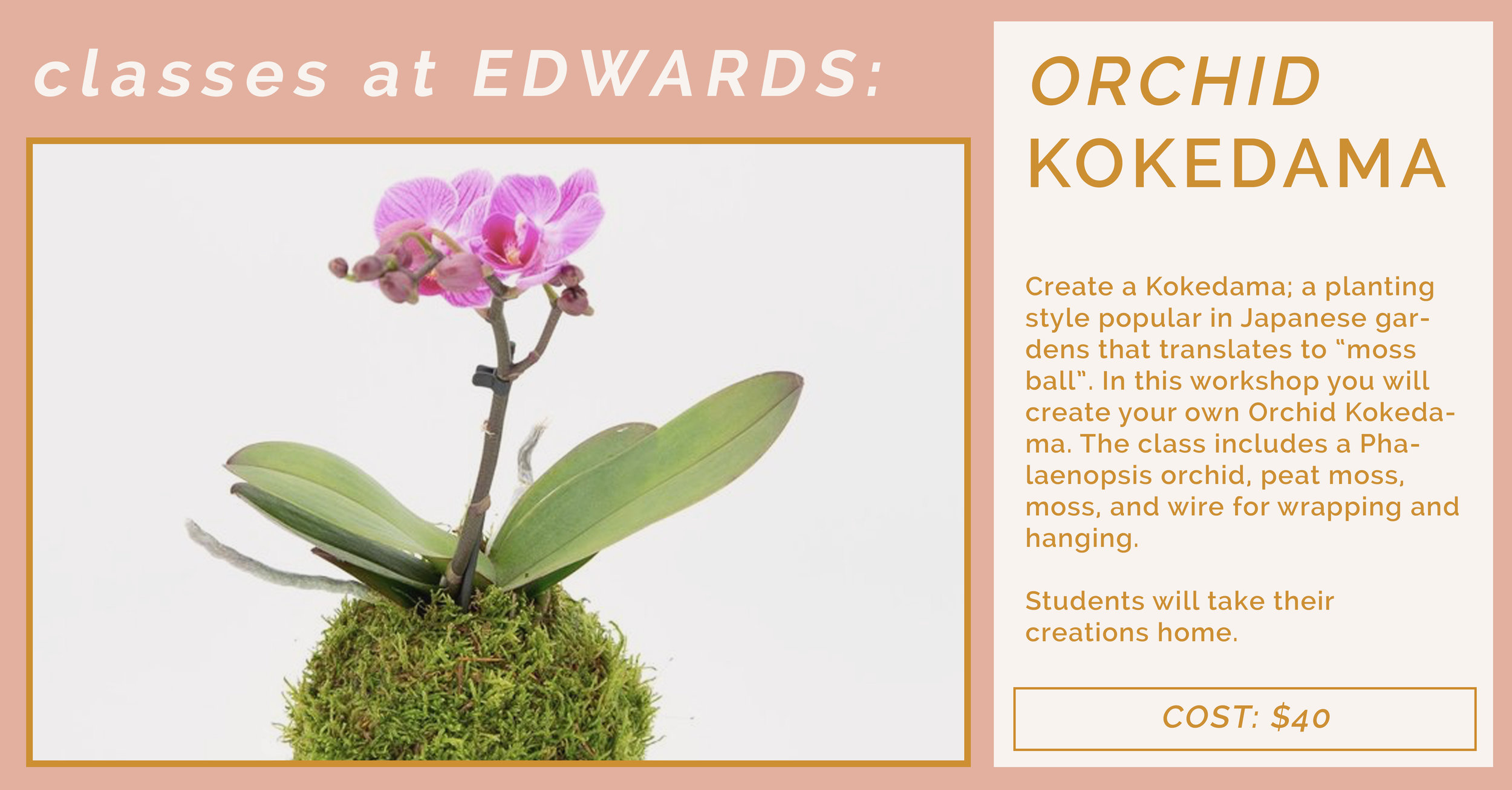 orchid kokedama.jpg