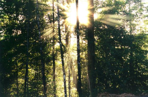 sun_through_trees40