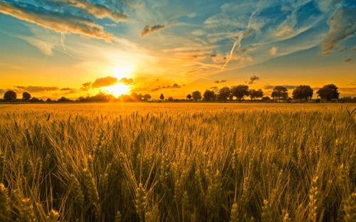 Harvest-Field.jpg