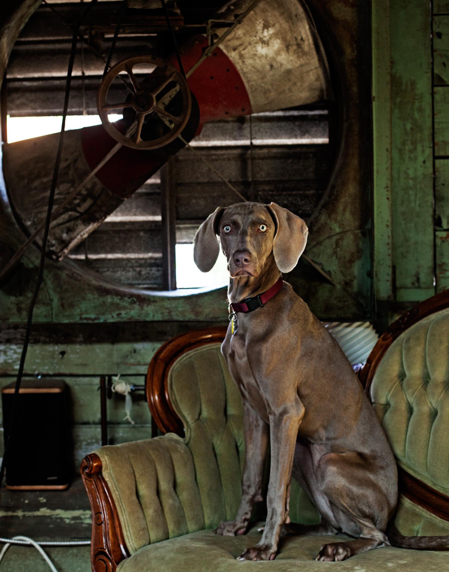 Han Starnes of Josi Faye's dog Meg. Josie Faye produces small batch handworked knitwear.