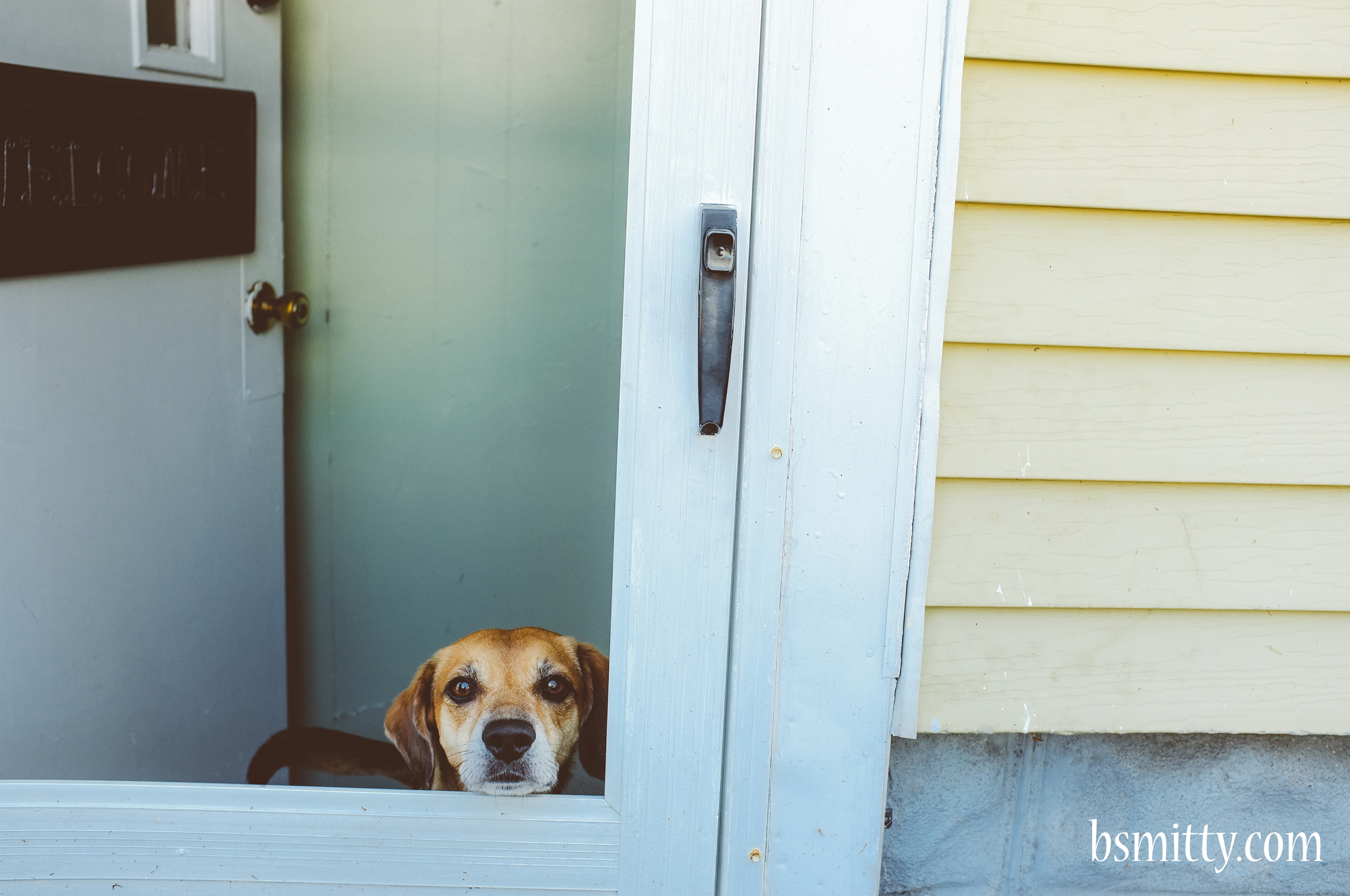 dog - photo bsmitty copy.jpg