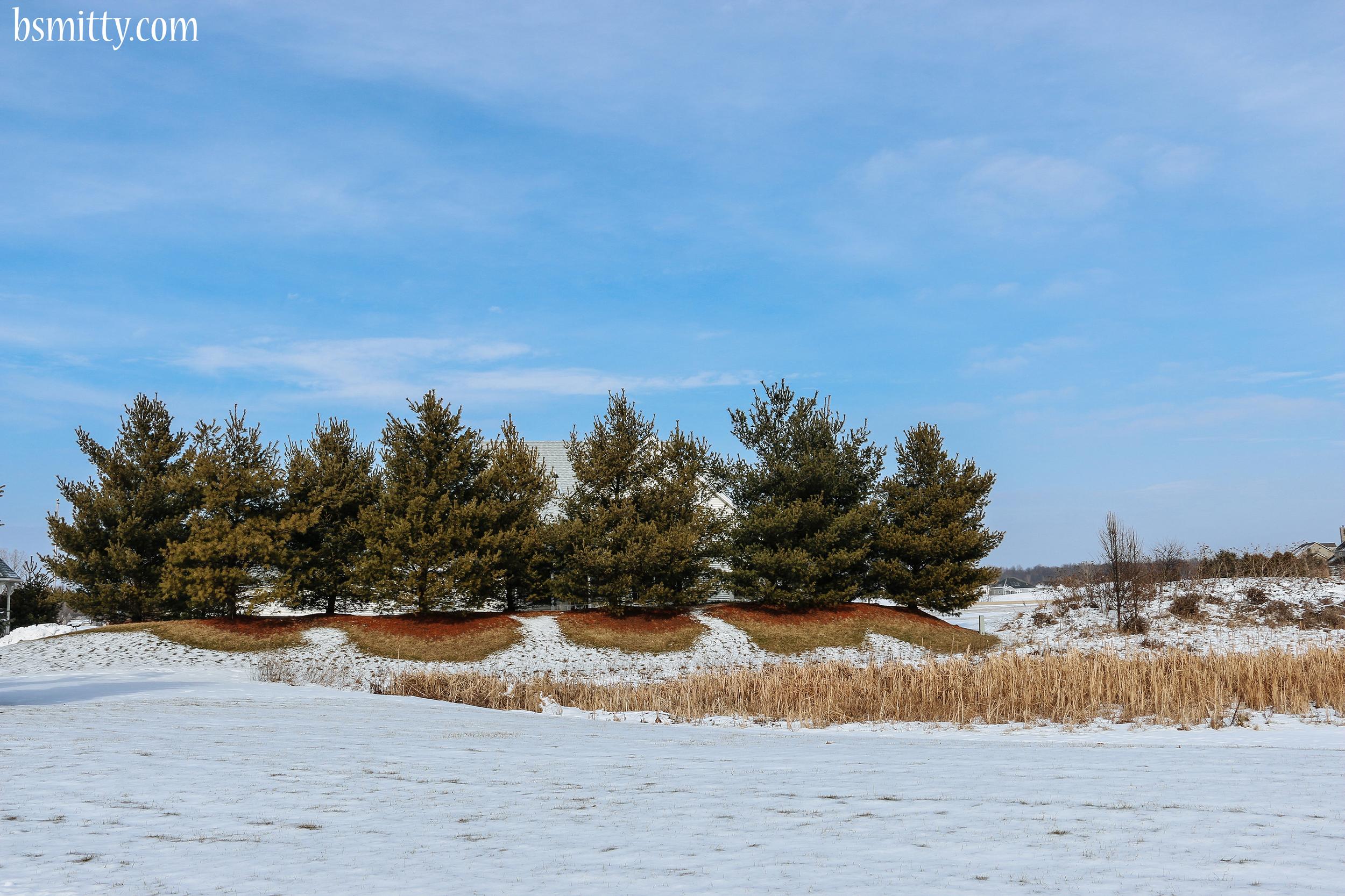 line of trees - photo bsmitty copy.jpg
