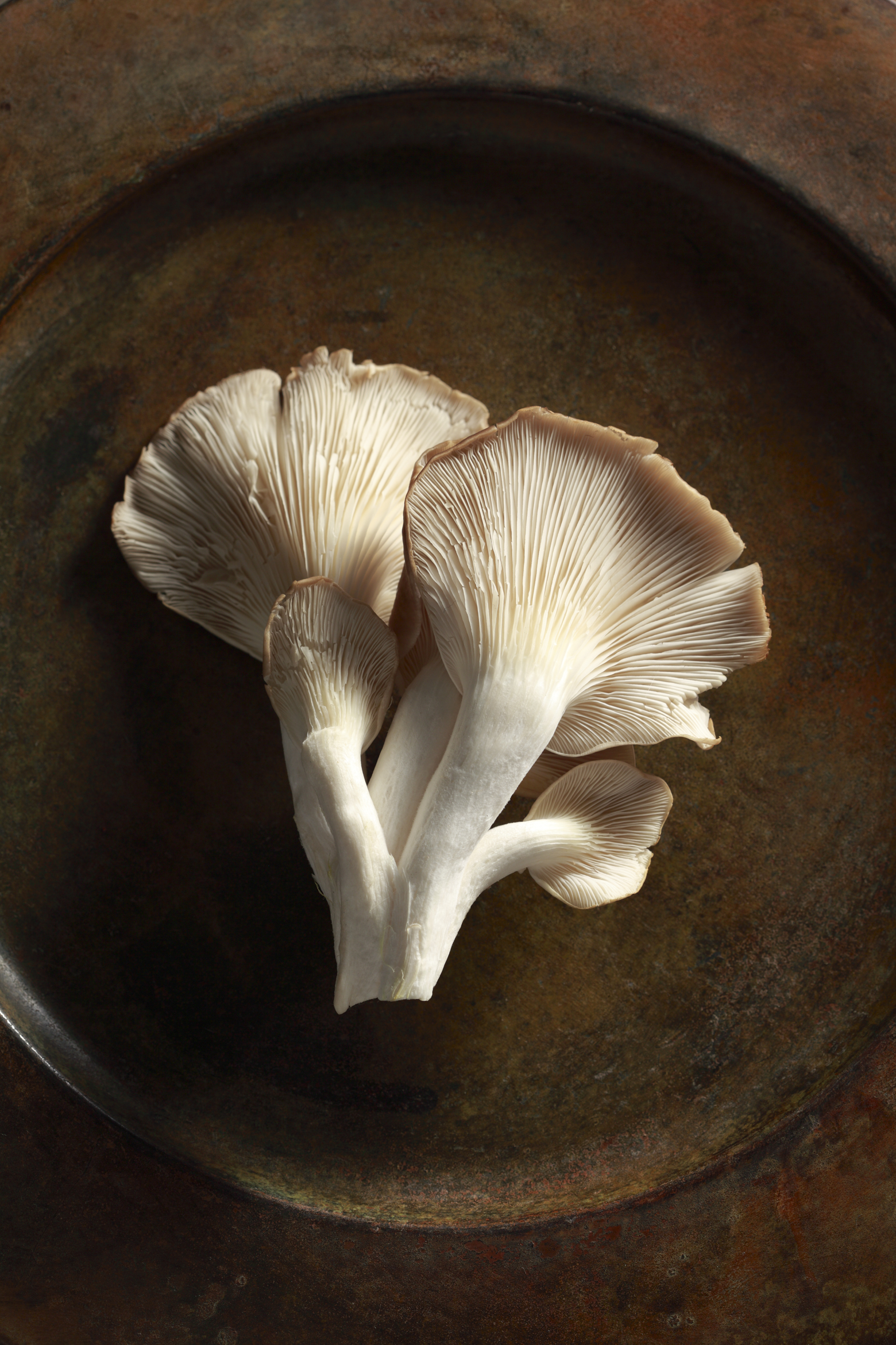 Mushrooms 4.jpg