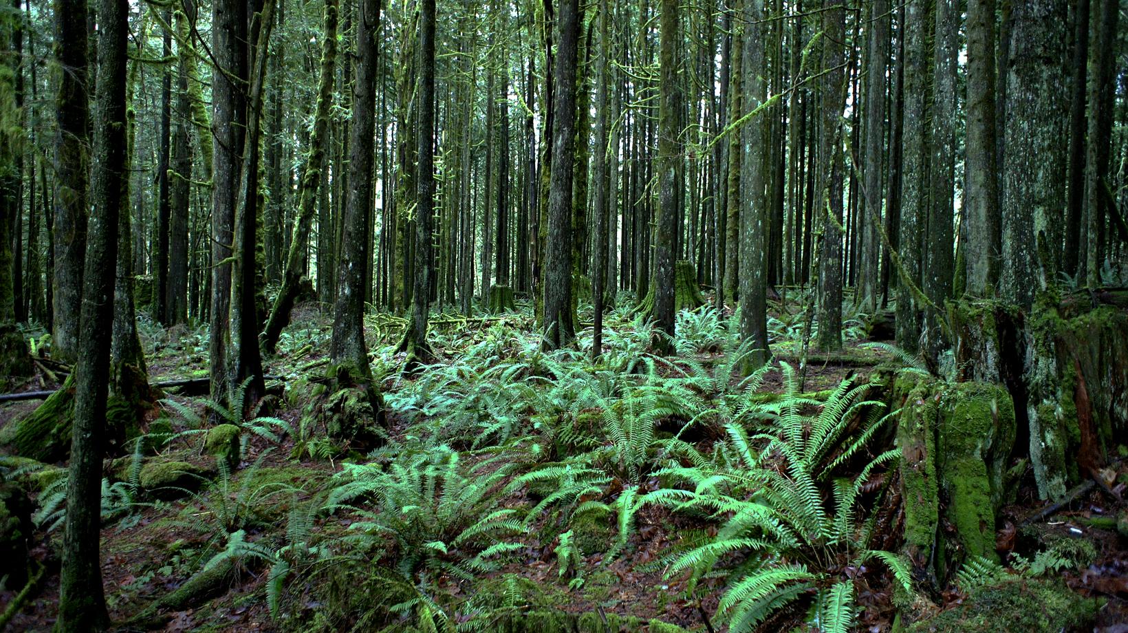 rainforest mod.jpg