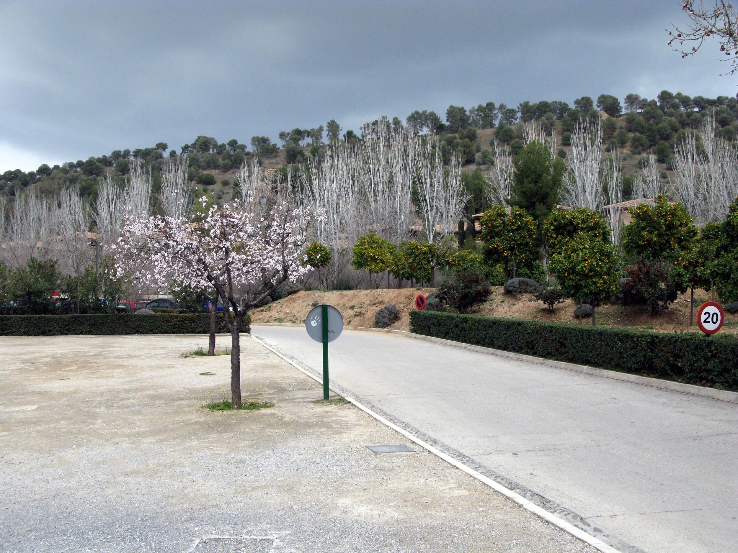 blossom_rsz.jpg