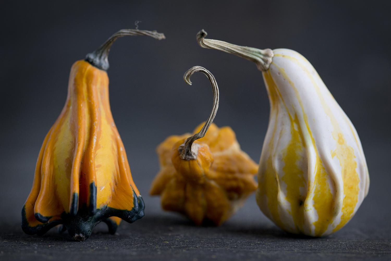 Gourds 8.jpg