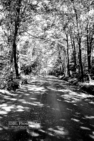 Shady Road_DBLPhotography