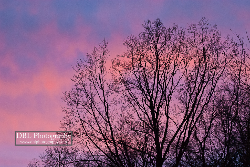 Twilight Trees_DBLPhotography
