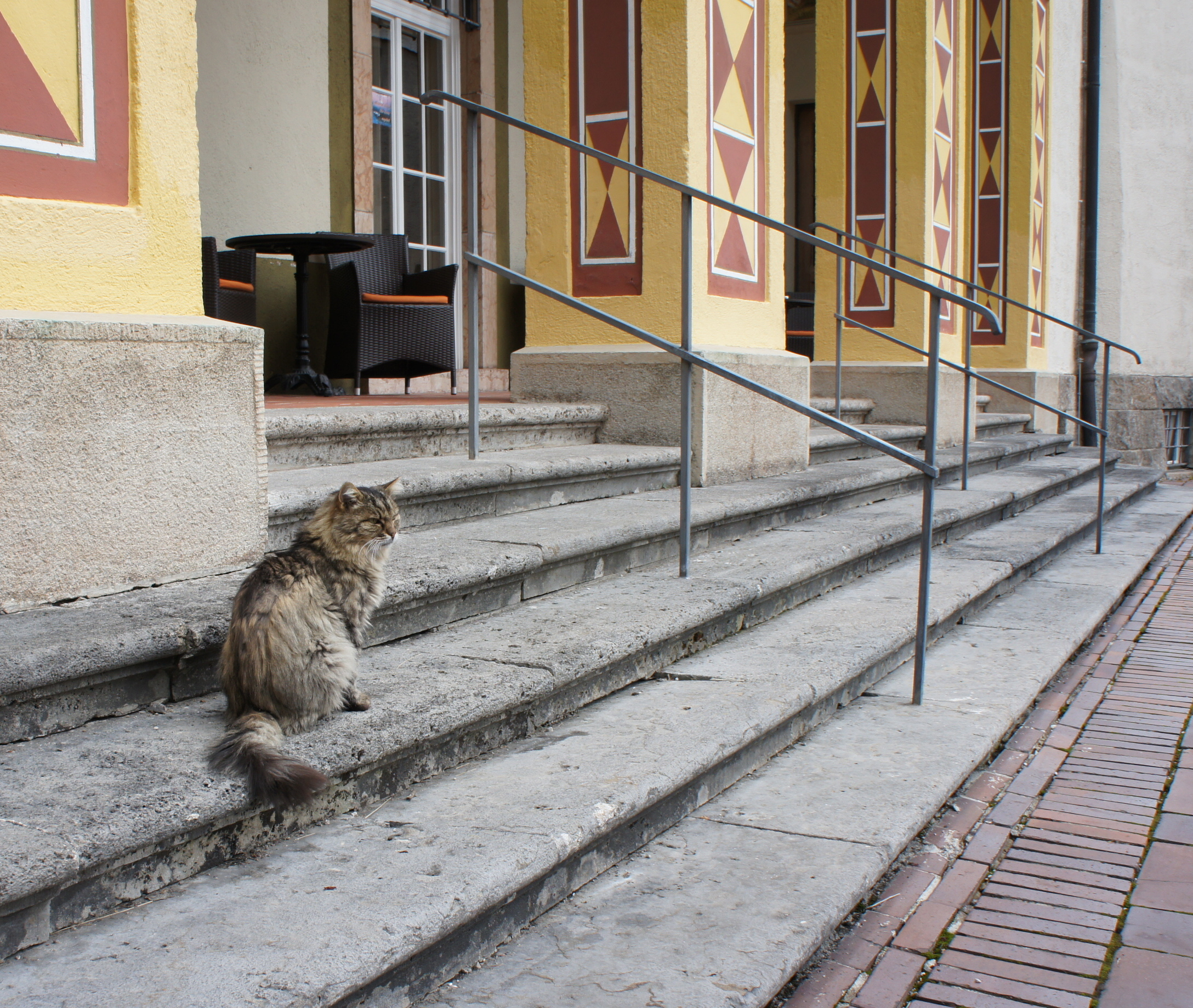The castle cat