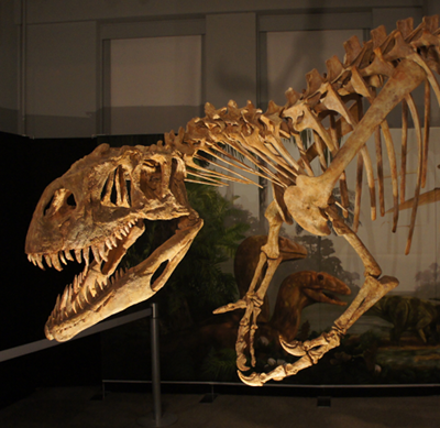 dinosaur3_afrovenator.png
