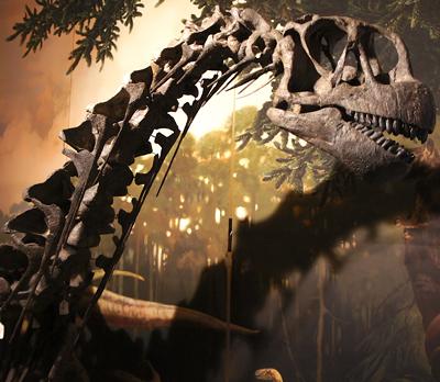 dinosaur4_camarasaurus.png