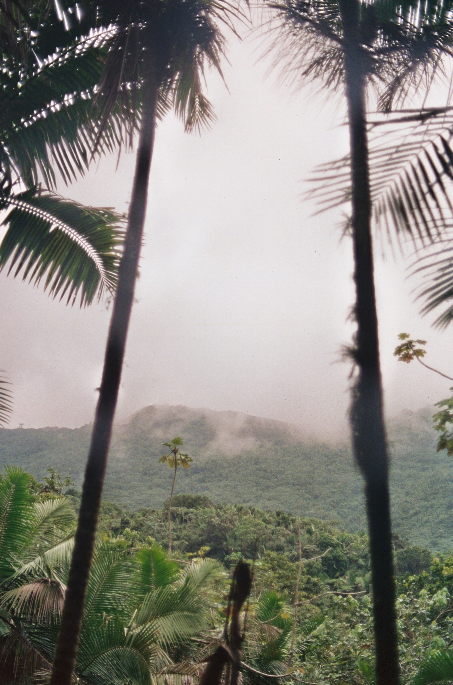 Jungle View from Above Puerto Rico
