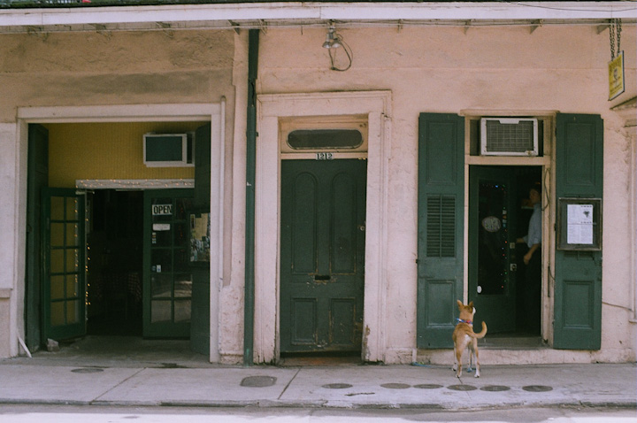 Dog and House New Orleans