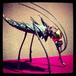 This insect is so intricate, fascinating!