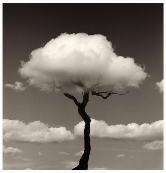 Tree Cloud by Chema Madoz