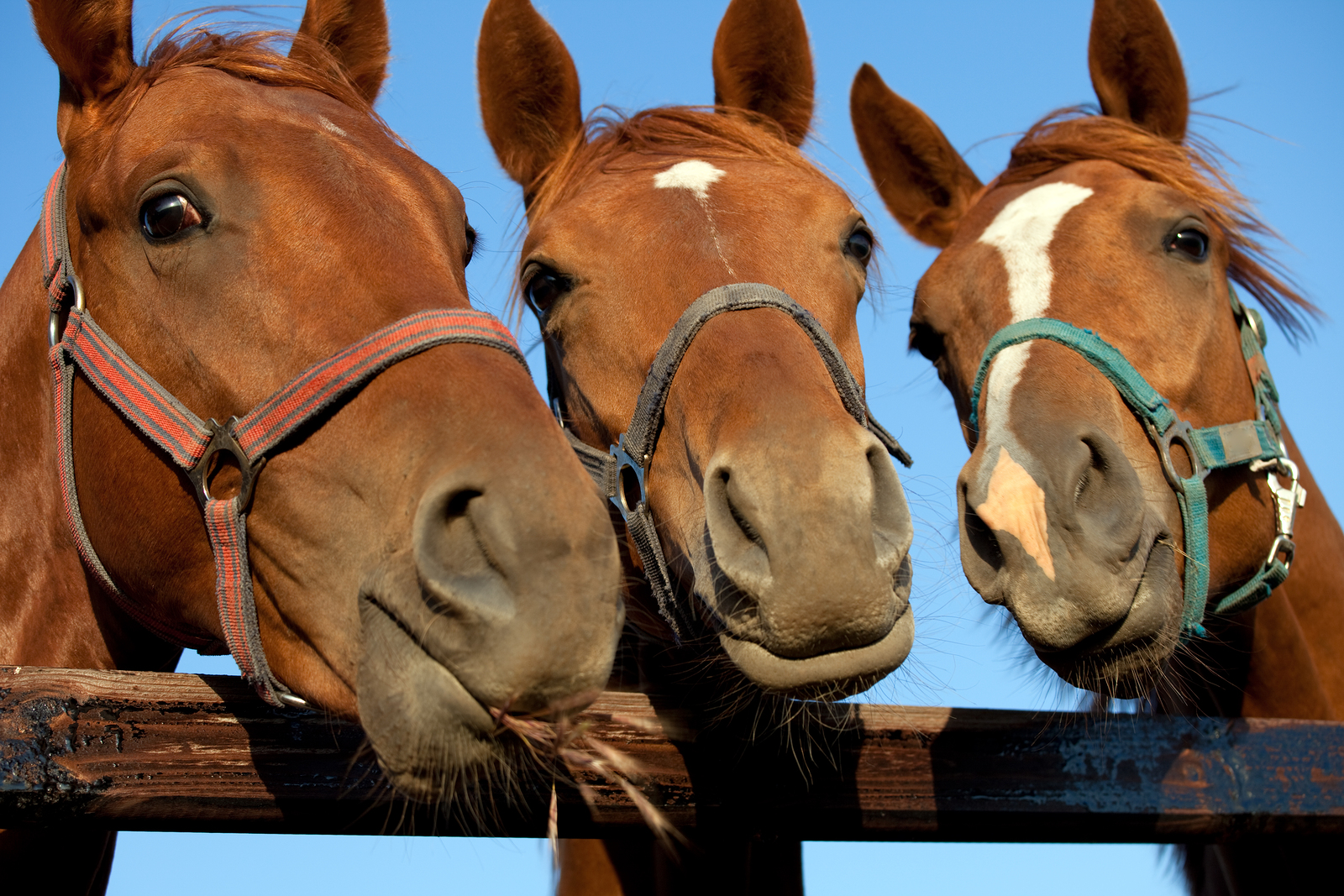 Equine Therapy in St. George, Utah