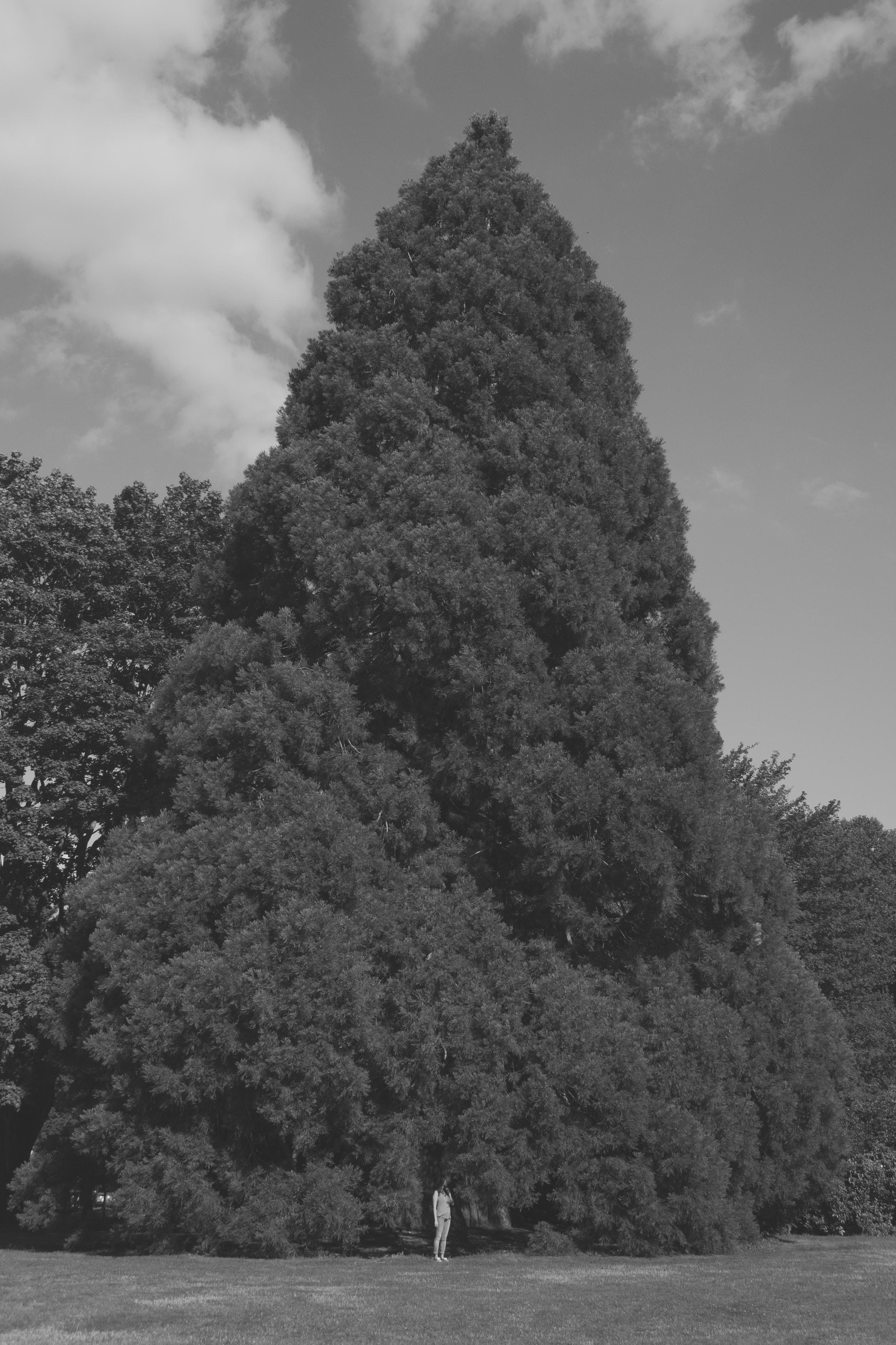 IMG_0194-2.jpg