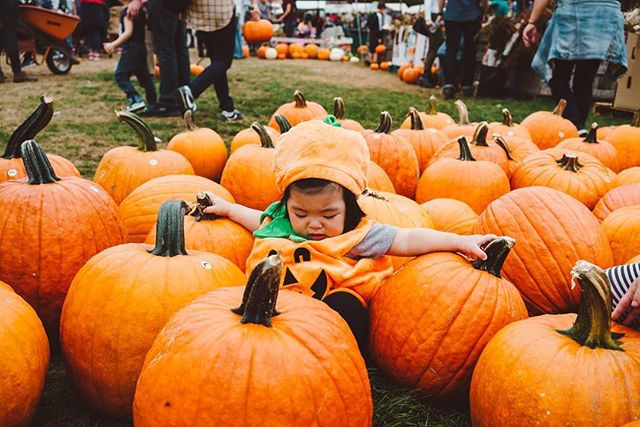 Happy pumpkin day! 🎃