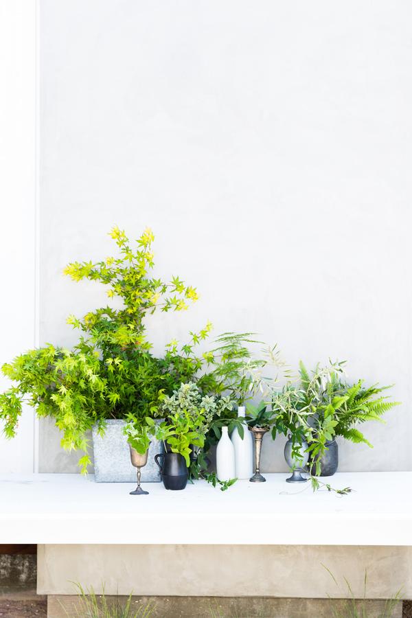 Lush_Foliage_5486.jpg