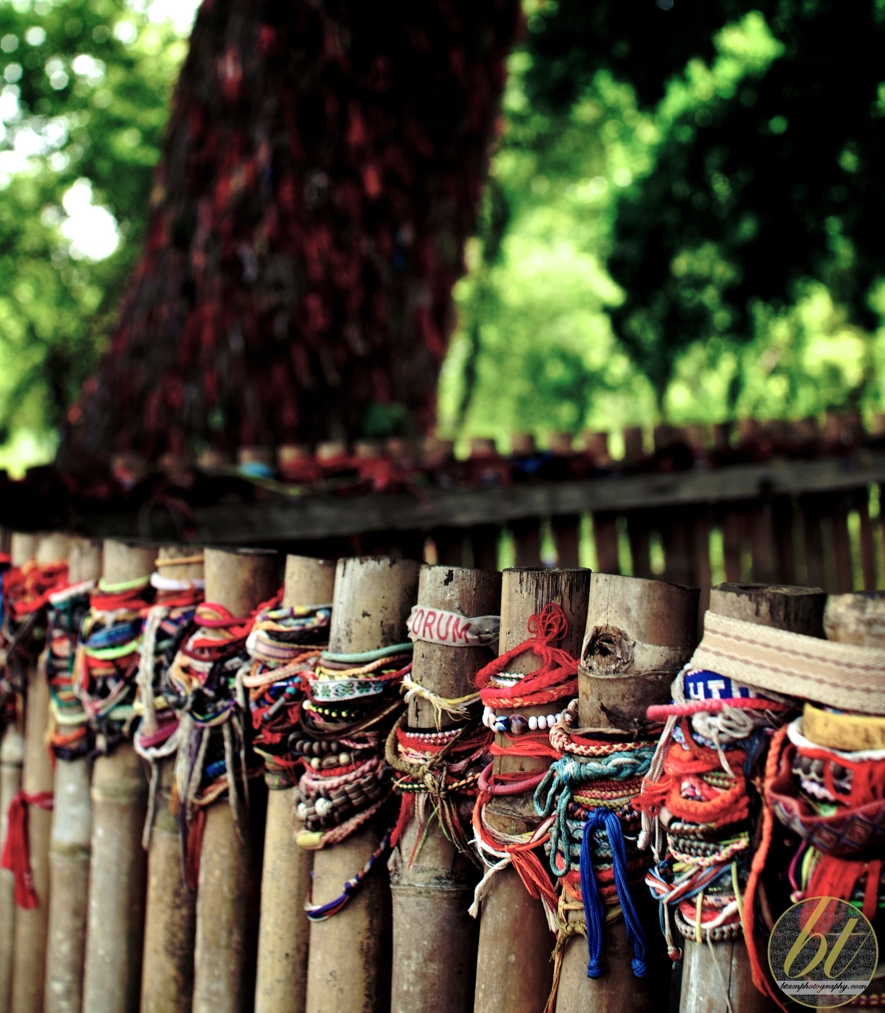 choeung ek killing fields - bracelets surrounding a mass grave of women and children, executioner's tree in background