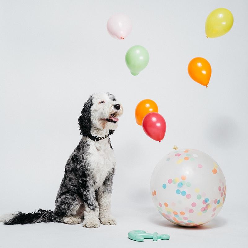 Waggo-modern-pet-products-store-shop-ecommerce-graphic-designer-heather-maehr.jpg