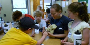 Learning about tooth specializations at Common Ground summer camp.