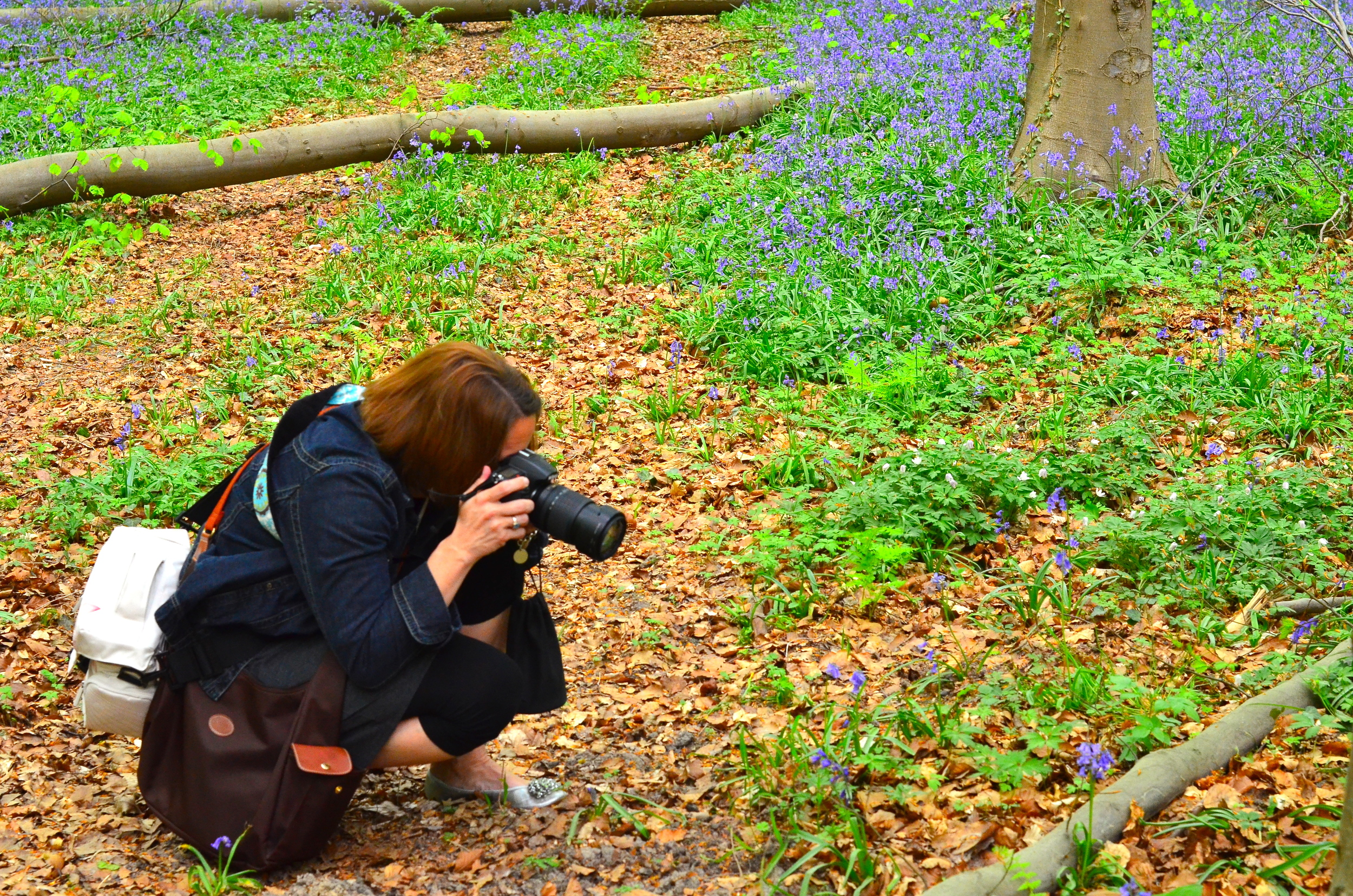 "Focusing on the bluebells  - and yes, some lovingly call us ""bag ladies!"""