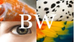 BehaviorWorks.jpg