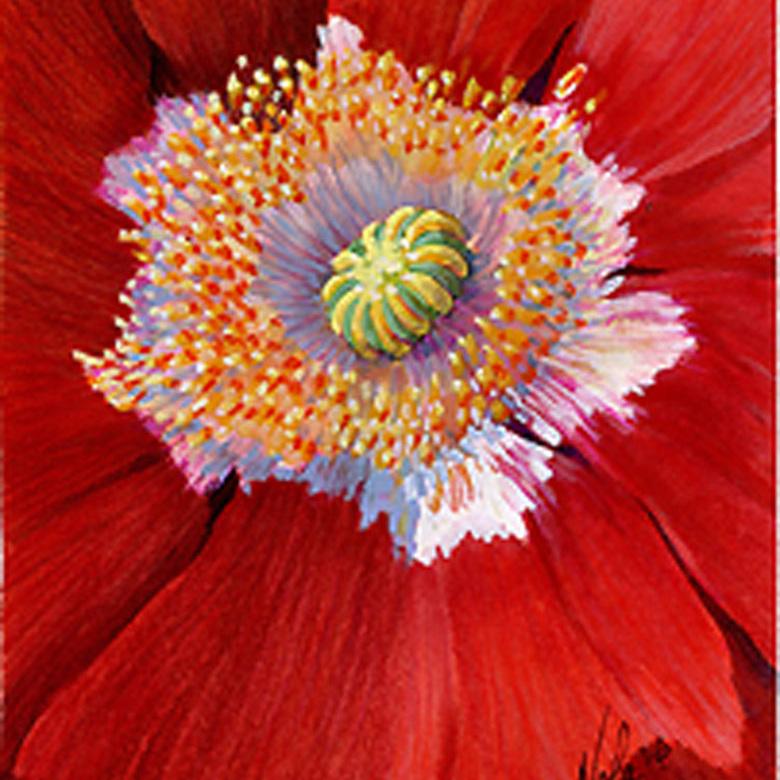 Woodland-Poppy-3.-jpg.jpg