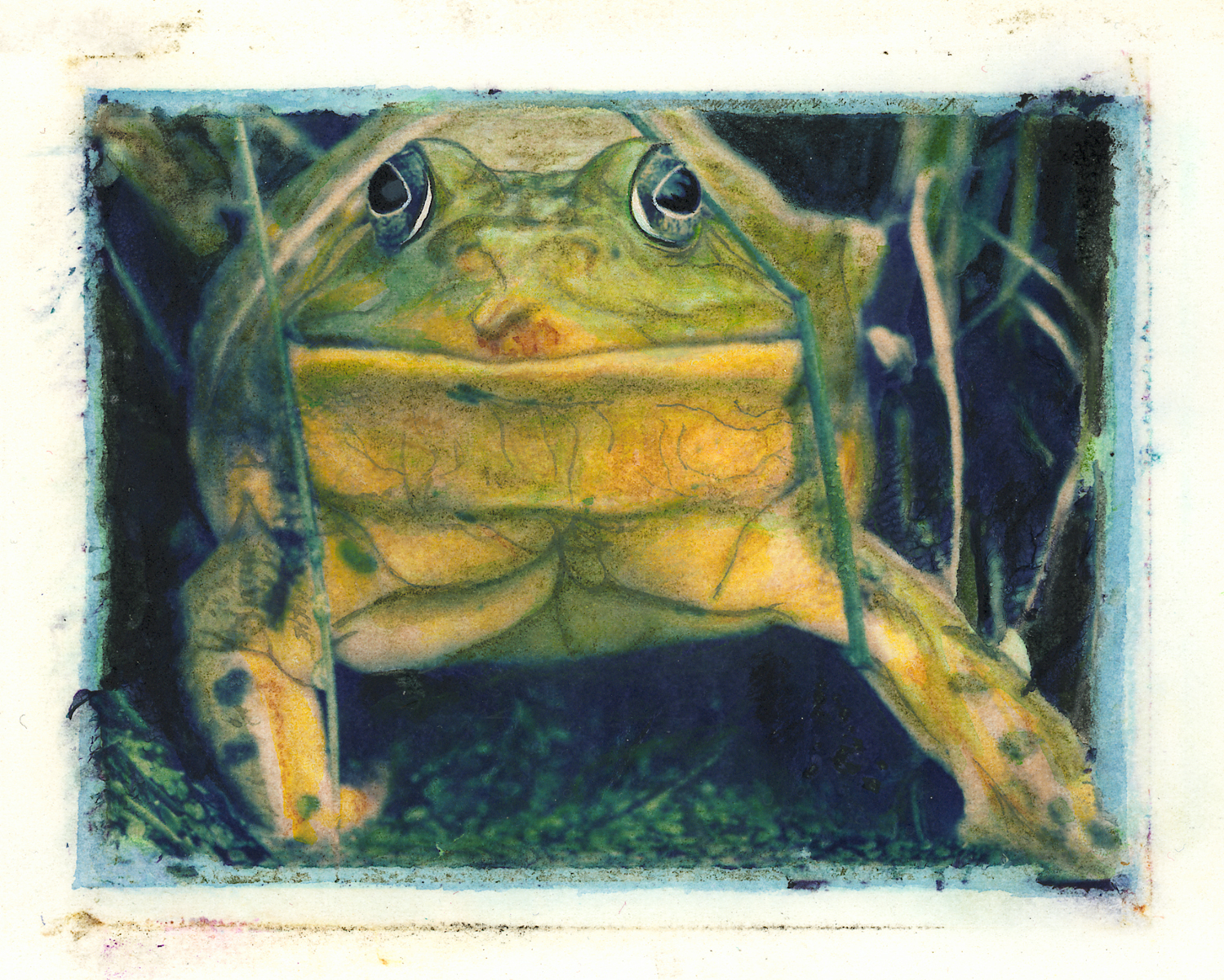 Full Frontal Bullfrog