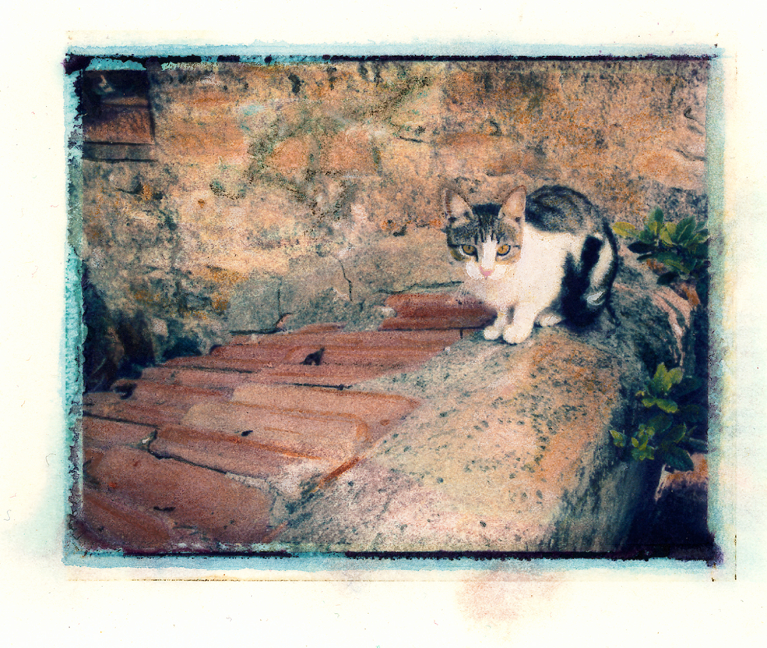 Cat on Roof, Tuscany
