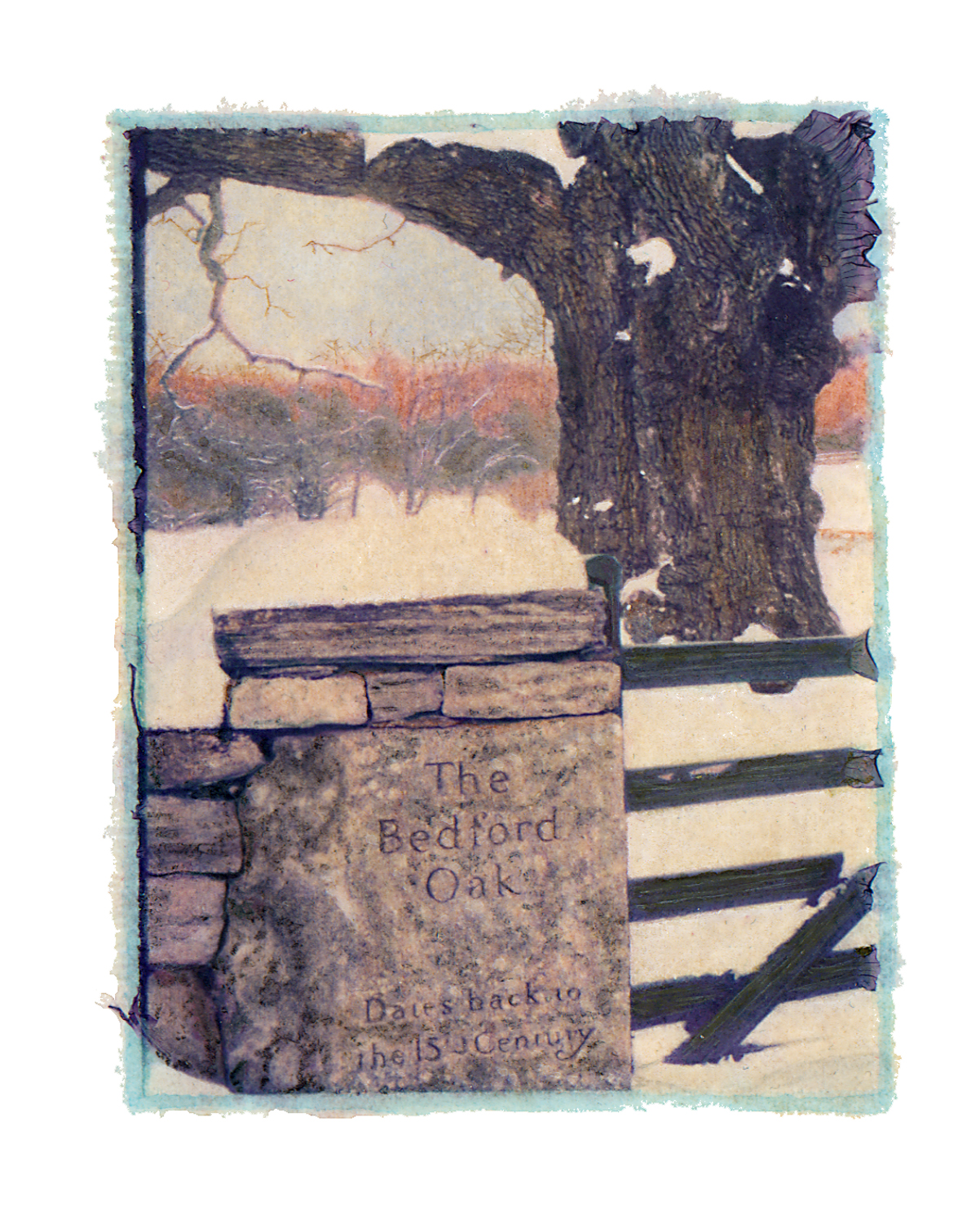 Bedford Oak, Winter