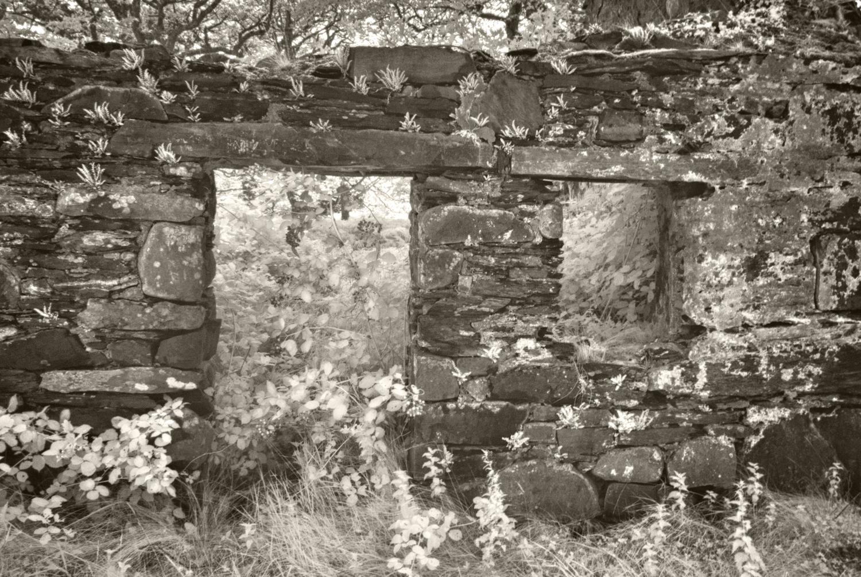 Mossy Forest Wall, Sheffrey Hills