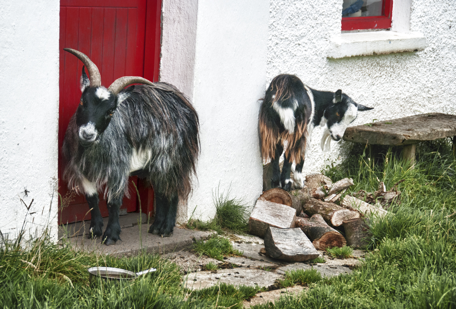 Goats and Red Door, Slieve League