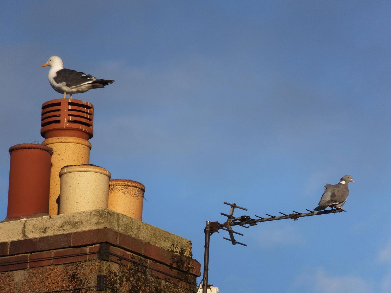 Birds in Newburgh (sounds like Newboro)