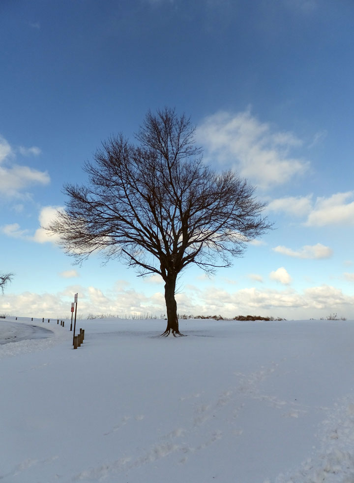 Favorite Tree.