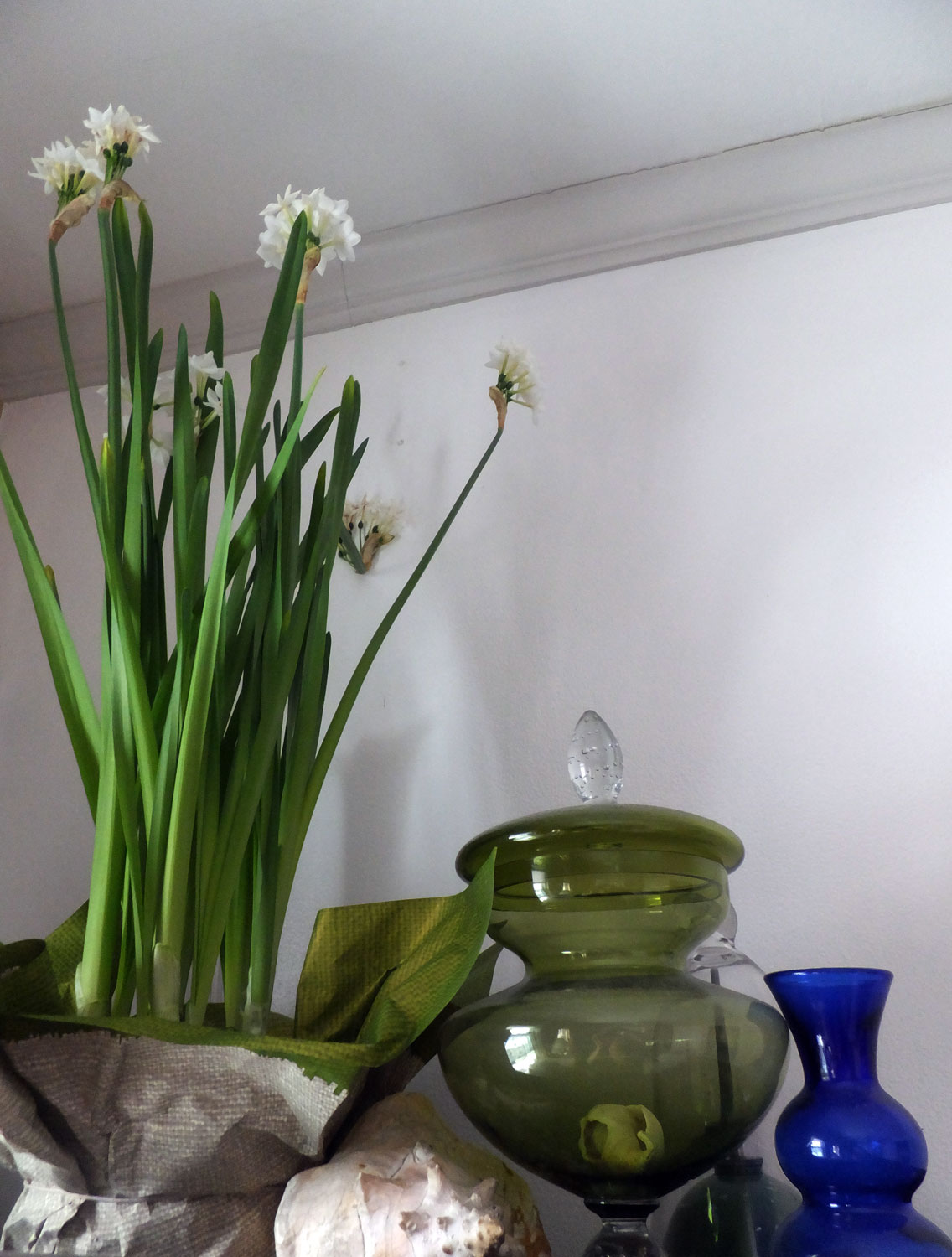 Paper whites blooming