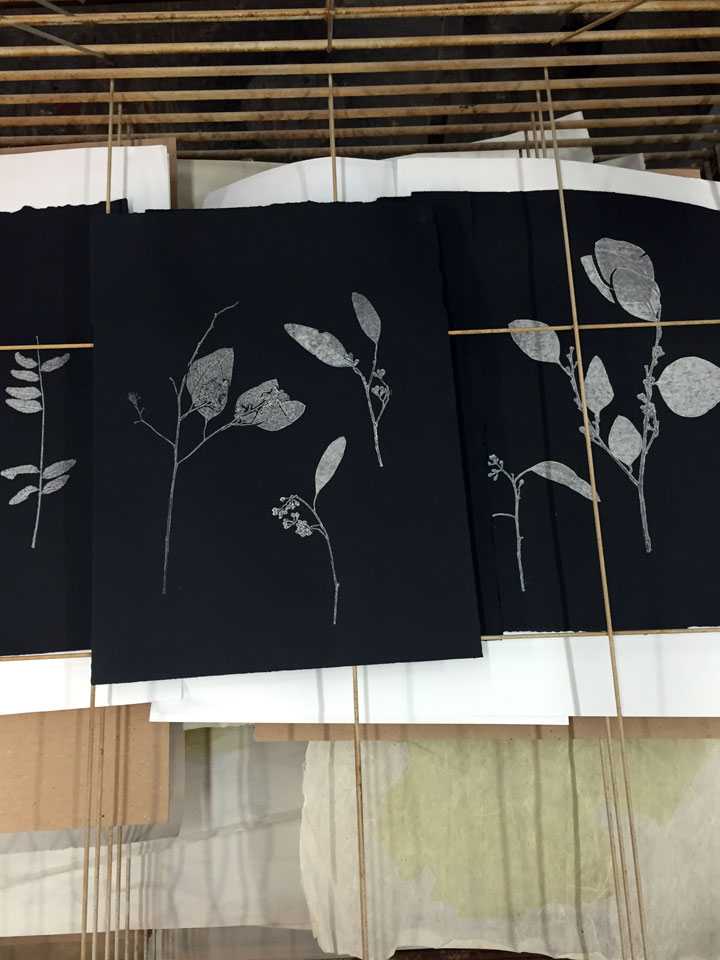 Several 'wet' prints drying on the racks at  Zygote press  in Cleveland, Ohio.