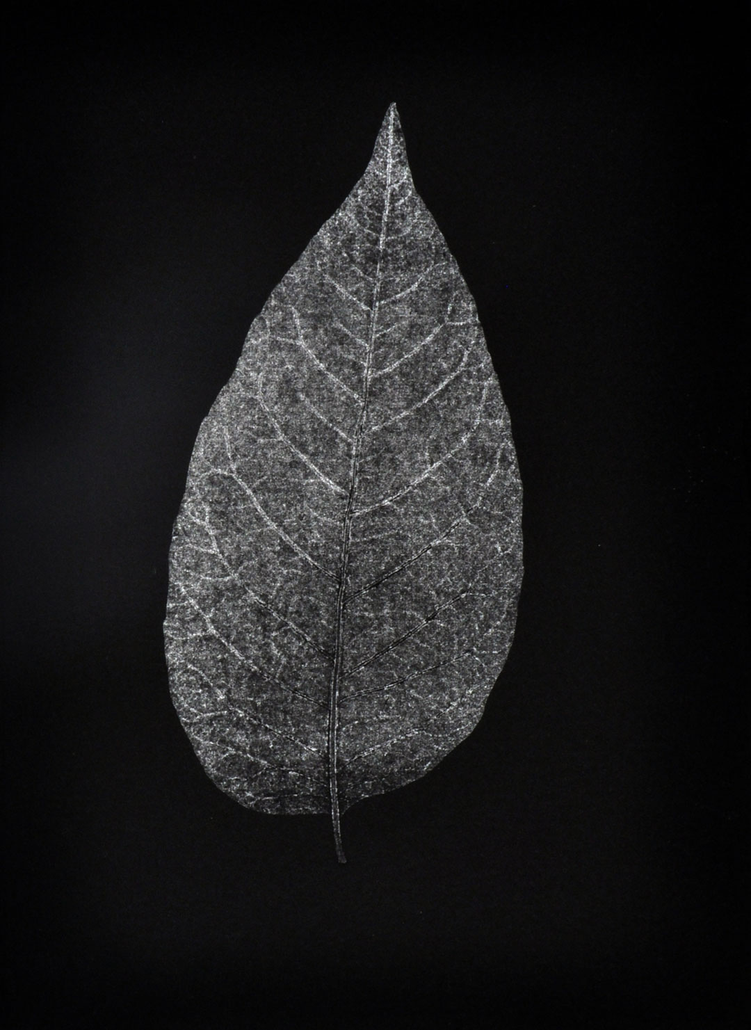 """Monotype, 2014, Christine Mauersberger dried and flattened Leaf, silver ink, black somerset paper. 5 1/2"""" x 7 1/2"""""""