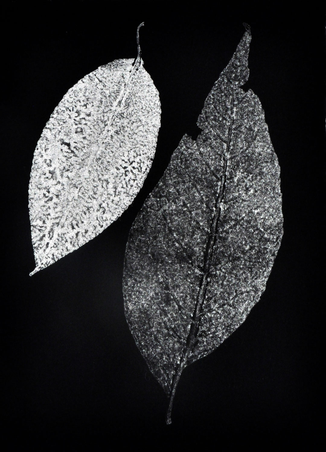 """Monotype, 2014, Christine Mauersberger dried and flattened Leaves, silver ink, black somerset paper. 5 1/2"""" x 7 1/2"""""""