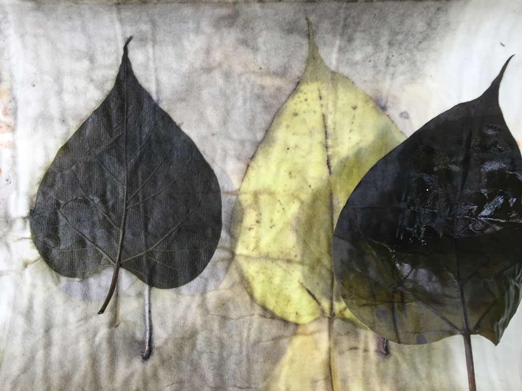 Catalpa leaves from my yard  on  paper