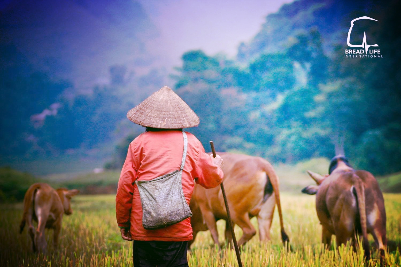 cambodia-fields-buffalo.jpg