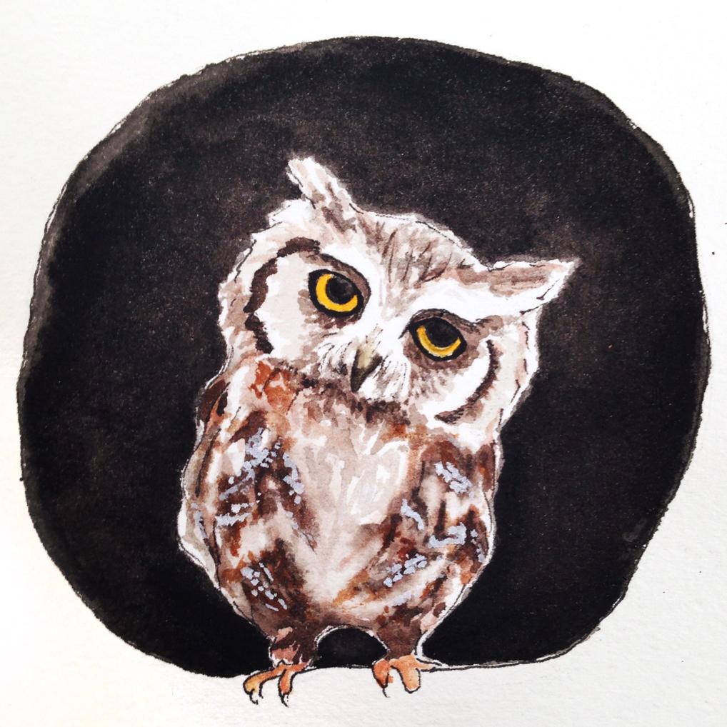 05-140129-owl.jpg