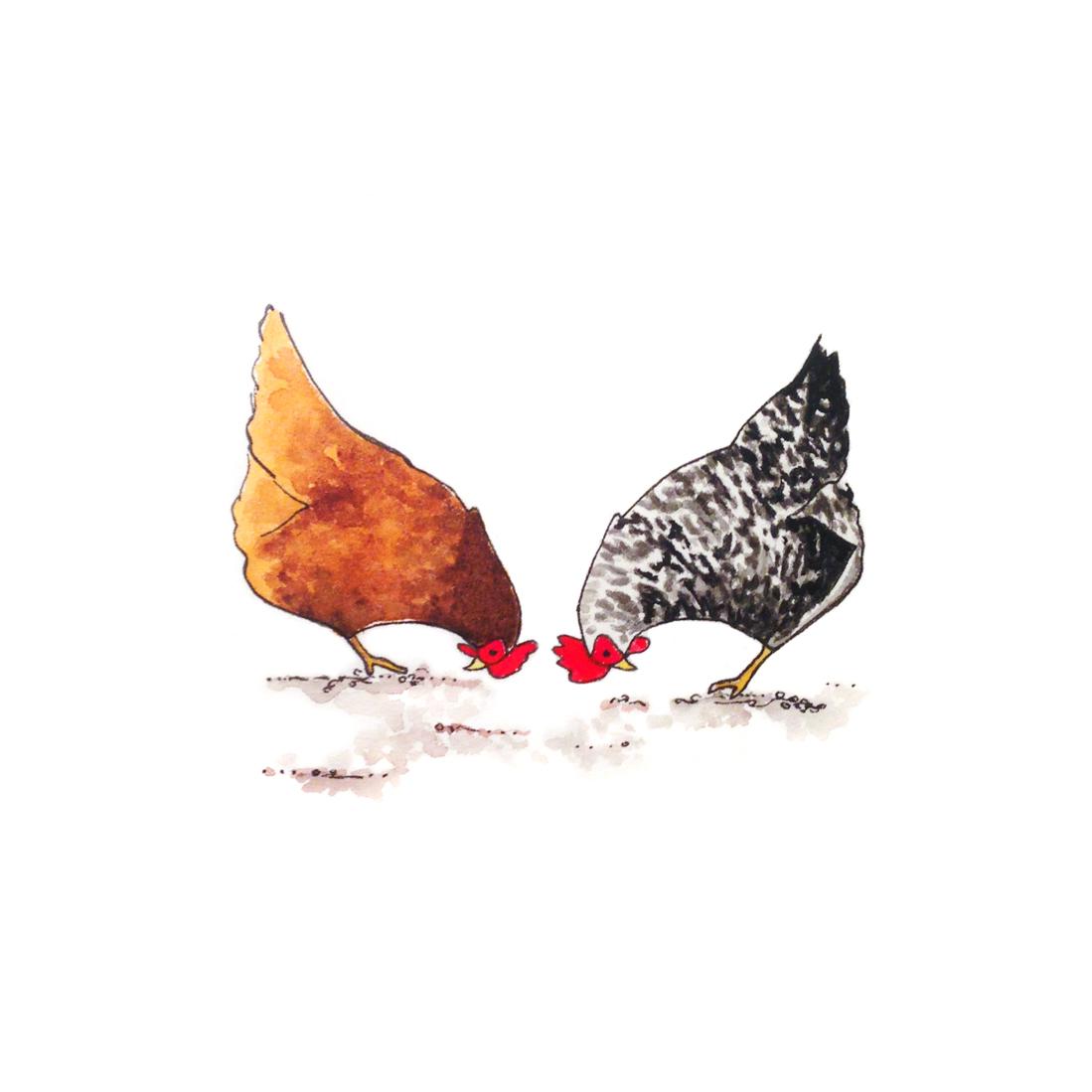24-140610-chickens.jpg